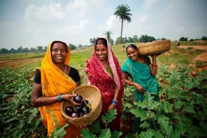 Women in agriculture Source: USAID_India-1